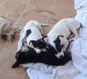 Nach dem Spielen sind sie müde: Lola, Domingo und Mücke machen einen Haufen.