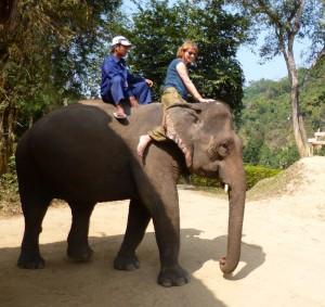 elefant-reiten