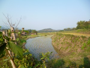 reisfelder-laos