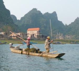 seegras-ernte-vietnam