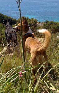 Hunde in freier Natur mit Gräsern