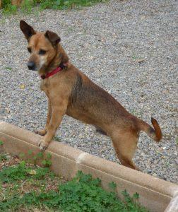 Charmantes Knickohr: Yayo checkt die Lage in der Villa Bunter Hund