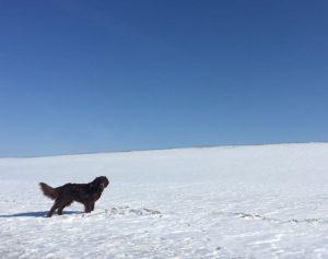 Hund Ayla im Schnee