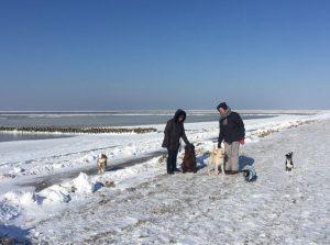 Spaziergänger mit Hunden im Schnee am Deich und Vorland