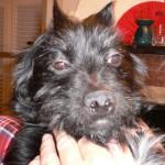 Ich gebe zu, es gibt schönere Hunde... tschuldigung - es gibt schönere Bilder von Murphy