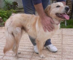 Abgesehen von dem rechten Hinterbein ist Trine ein lebensfroher und gesunder Hund