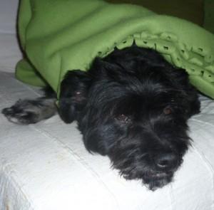 Unendlich müde: Murphy