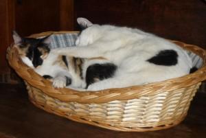 Zwei Katzen im Körbchen