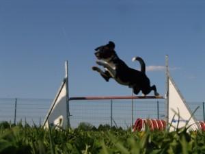 Hund / Agility by Christine Braune_pixelio.de