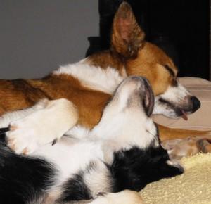 Hunde schlafen viel