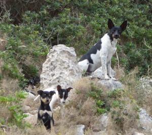 Ausgesetzte Hunde auf Mallorca