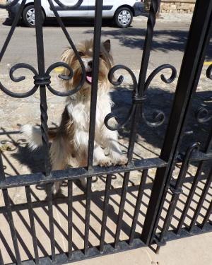 Hund Gordi wartet am Gartentor