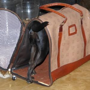 Pepa testet die Reisetasche