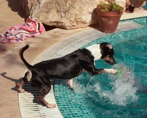 Hund spielt mit Ball im Swimmingpool