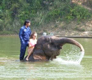 Das Baden nach Feierabend macht Elefanten wie Besuchern gleichermaßen Spaß