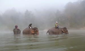 elefanten-arbeitsweg