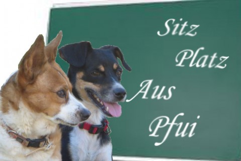Zwei Hunde vor der Tafel