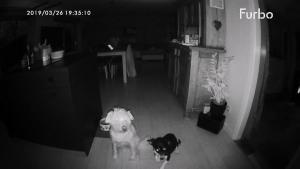 Furbo Nachtaufnahme mit 2 Hunden