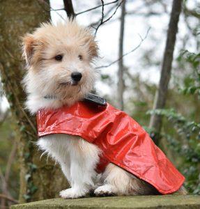 Kleiner niedlicher Hund im roten Mäntelchen